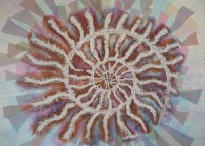 Ammonite by Shirley